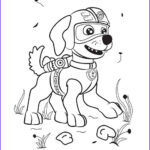 Zuma Paw Patrol Coloring Page Awesome Photos Paw Patrol Zuma Coloring Kit Coloring Pages