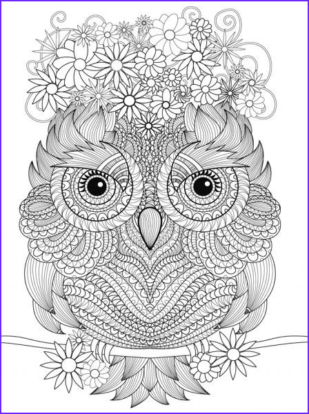 Adult Coloring Page Owls New Photos Great Owl Drawing Another One for My Coloring Collection