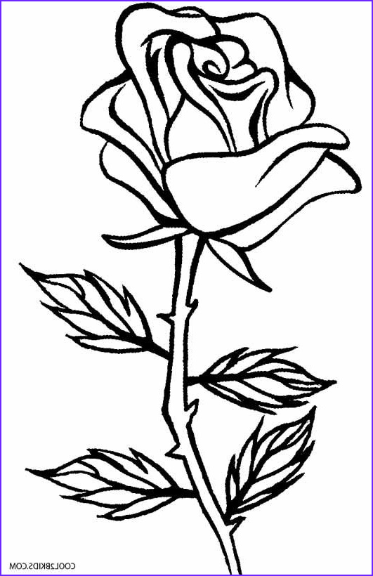 Adult Coloring Page Rose Beautiful Stock Printable Rose Coloring Pages For Kids Cool2bkids