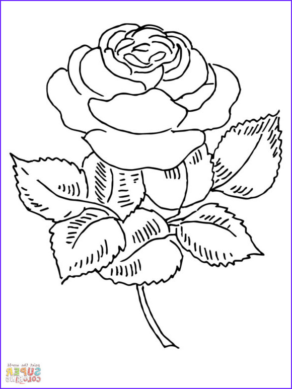 seductive roses adult coloring pages