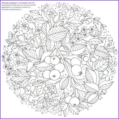 Basford Coloring Book Cool Images 104 Best Images About Johanna Basford On Pinterest