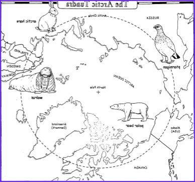 Biome Map Coloring Best Of Image Arctic Tundra Coloring Sheets