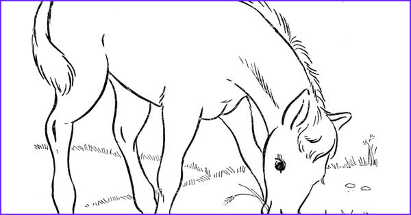 Breyer Horse Coloring Page Unique Photos Horse Coloring Page Foal Eating Grass