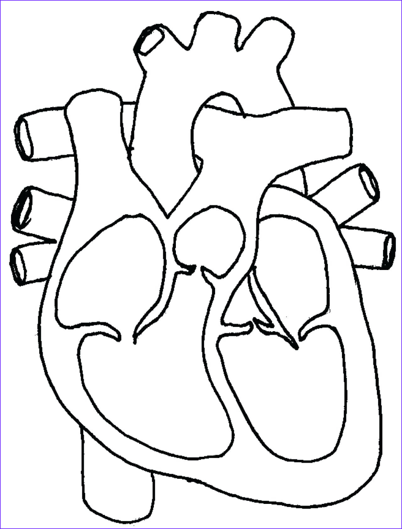 Circulatory System Coloring Sheet Inspirational Gallery Cardiovascular System Drawing at Getdrawings