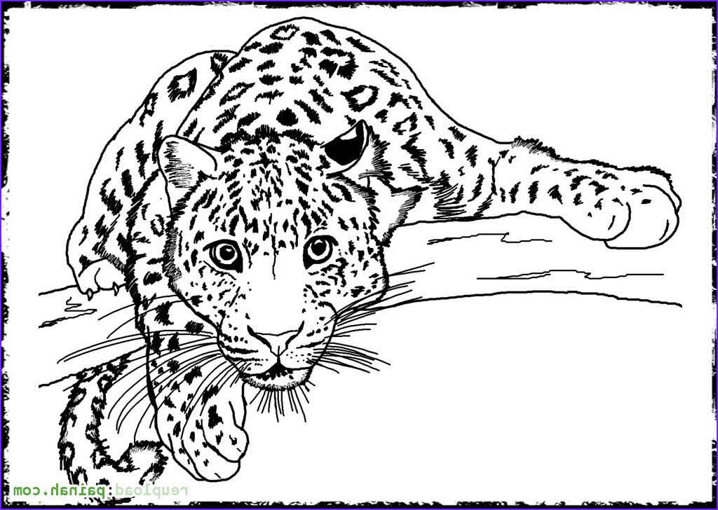13 Beautiful Photography Of Coloring Book Picture Of Animals