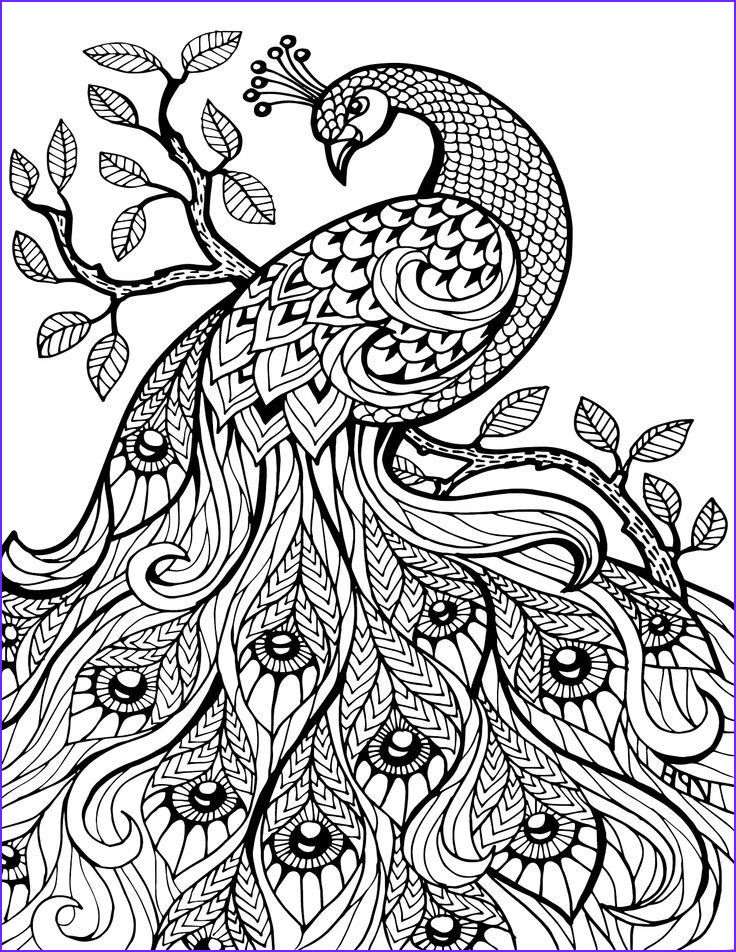 Coloring Page for Adults Printable Cool Stock Pin Em Adult Coloring Book Animals