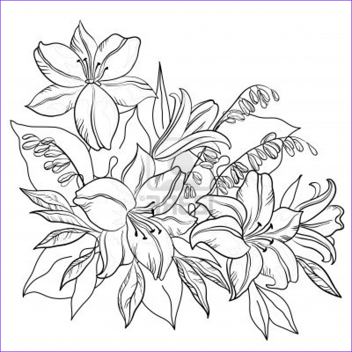 Coloring Page Of A Flower New Images Sunbeamflowers Flowers Outlines