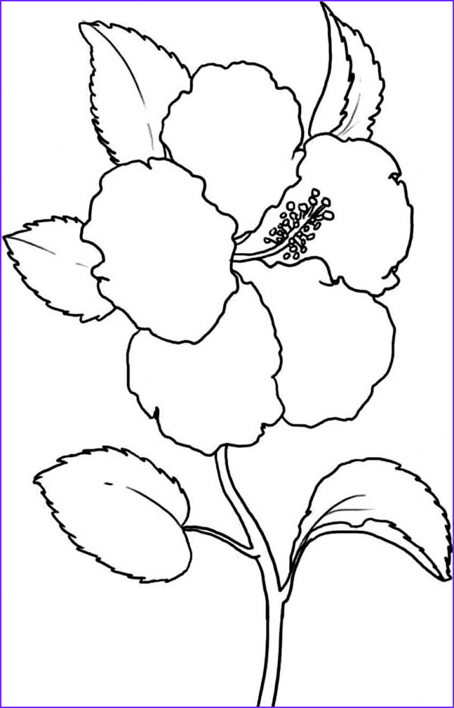 Coloring Page Of A Flower New Stock Free Printable Hibiscus Coloring Pages for Kids