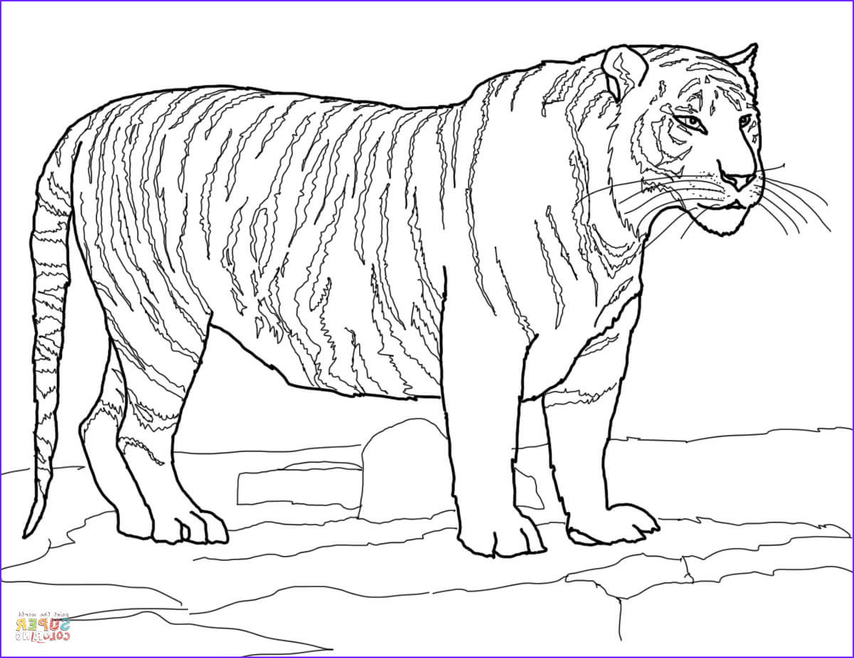 Coloring Page Of Tigers Elegant Gallery White Bengal Tiger Coloring Page