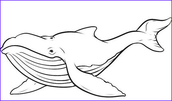 Coloring Page Whales Awesome Image Picture Of Blue Whale Coloring Page