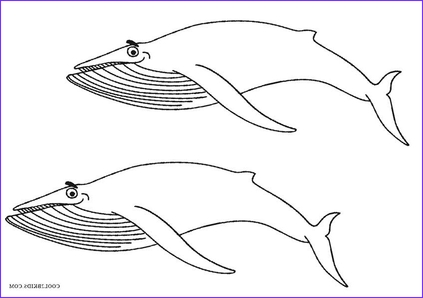 Coloring Page Whales Beautiful Photography Printable Whale Coloring Pages For Kids