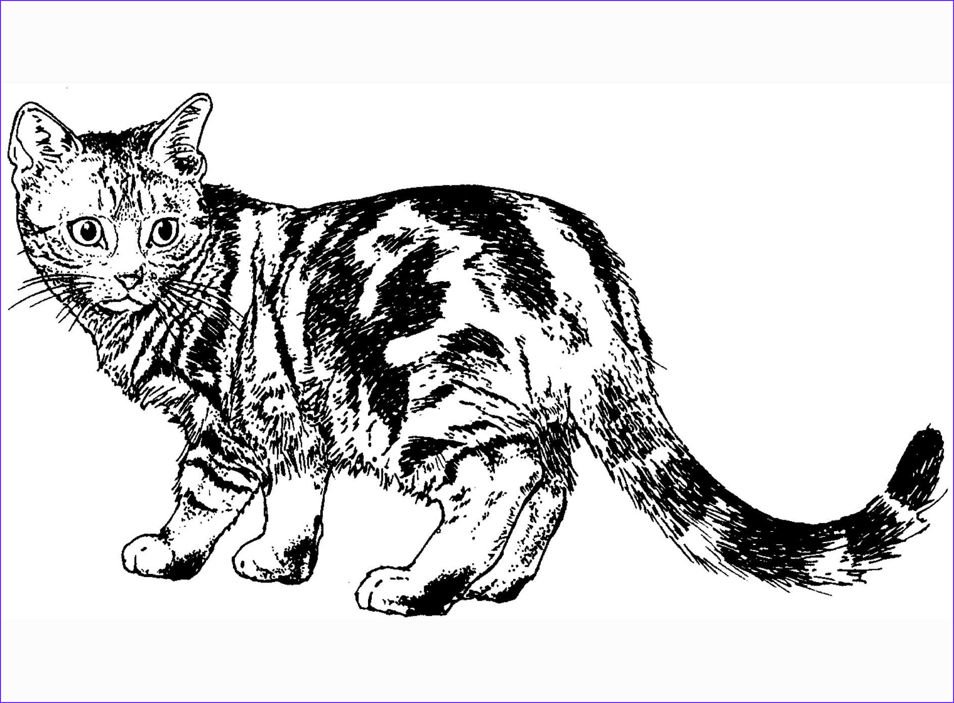 Coloring Picture Of Cats Inspirational Collection Cat Coloring Pages Cat