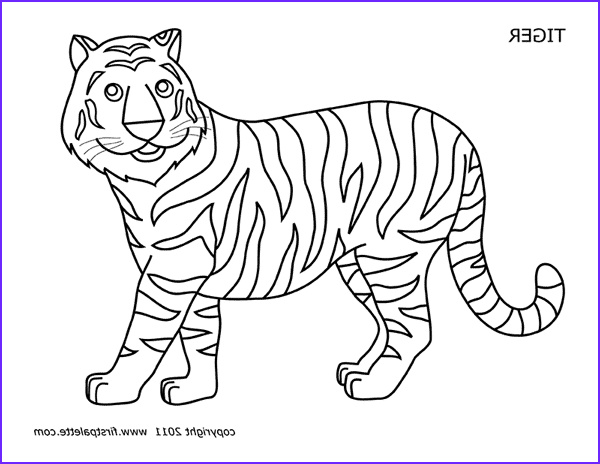 Coloring Picture Of Tiger Awesome Stock Tiger