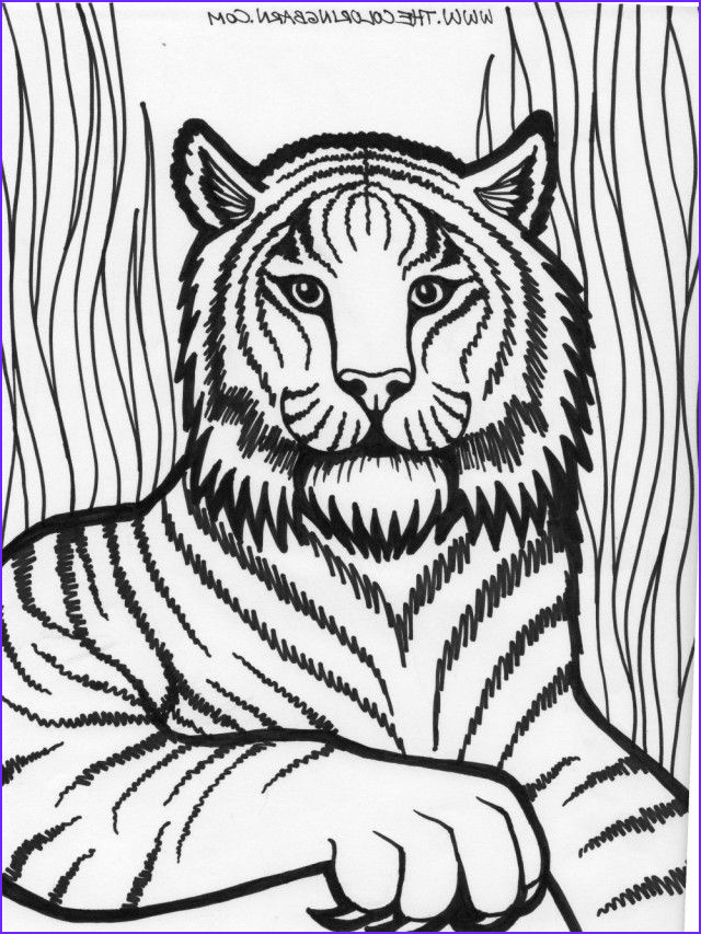 Coloring Picture Of Tiger Best Of Images 1224 Best Images About Coloring Pages for Kids On