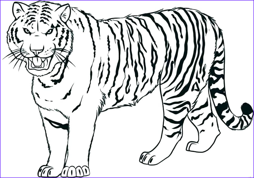 lion and tiger coloring pages