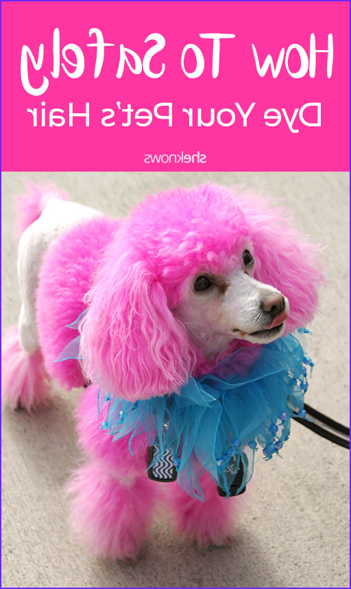 how to safely dye pet hair