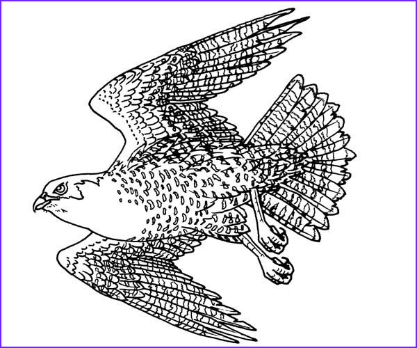 Falcon Coloring Page Beautiful Stock Free Coloring Pages Falcon Prey Bestofcoloring