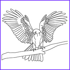 Falcon Coloring Page Unique Photos 10 Printable Falcon Coloring Pages for toddlers