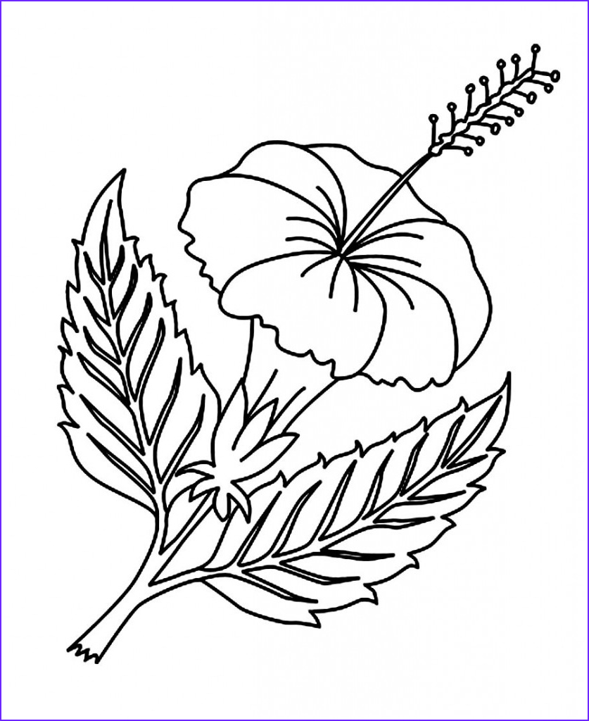 hibiscus coloring pages