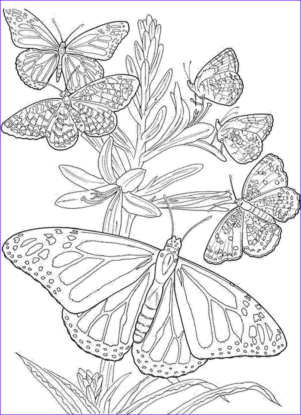 free butterfly mandala coloring pages