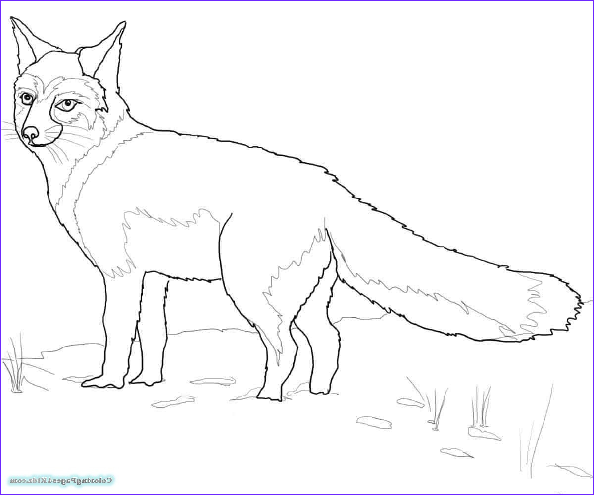 fox coloring pages 1048