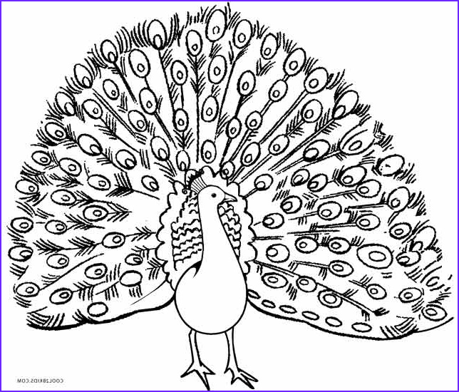 Free Peacock Coloring Page Cool Stock Printable Peacock Coloring Pages for Kids