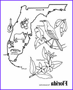Fsu Coloring Page New Images Florida State Symbols Coloring Pages