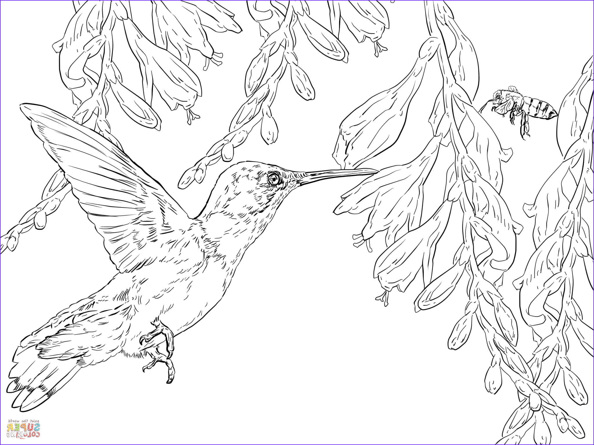 small coloring pages hummingbirds sketch templates