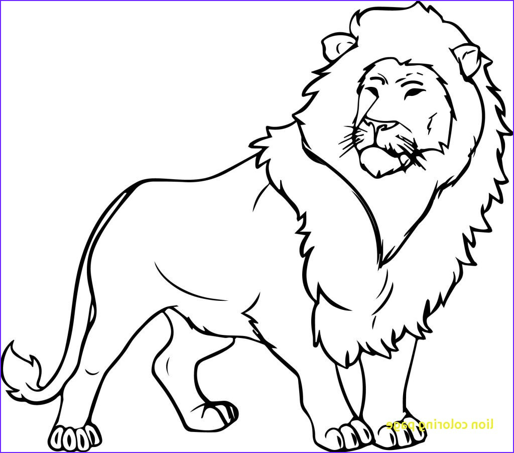 lion drawing for kids