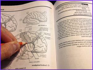 meditate and learn in color two anatomy coloring books reviewed