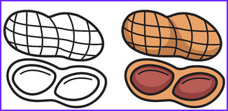 Nuts Coloring Page Beautiful Photos Nut Stock Illustrations Vectors & Clipart – 7 838 Stock