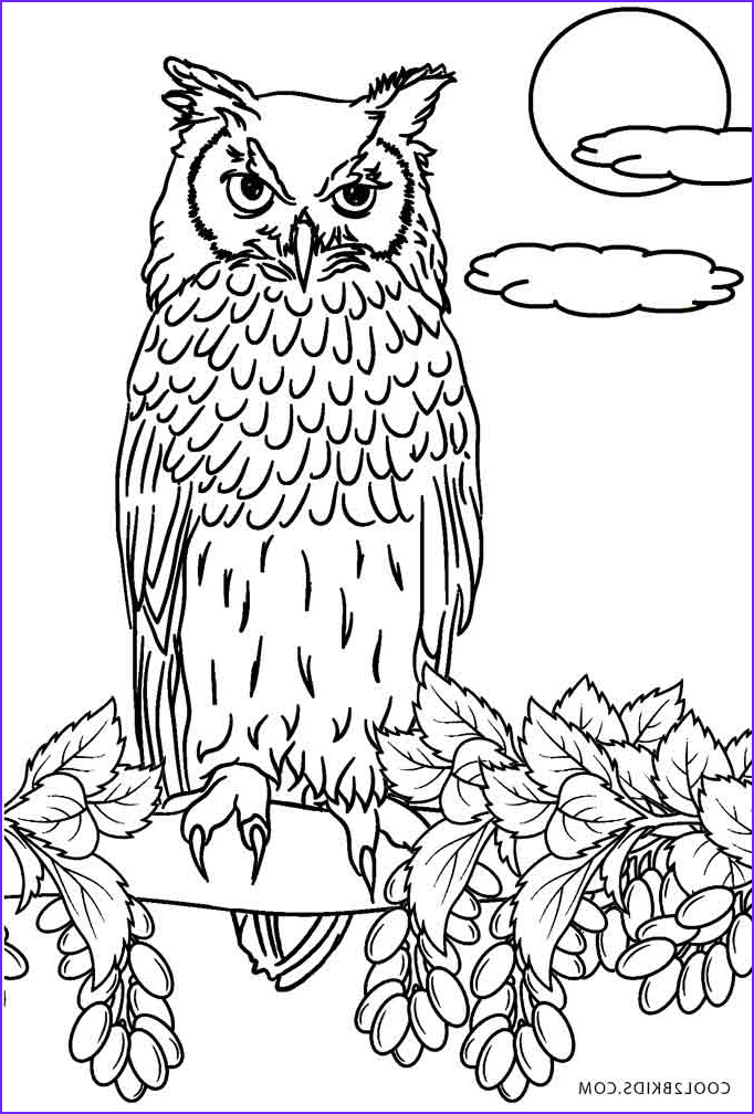 Owl Coloring Sheet New Gallery Free Printable Owl Coloring Pages for Kids