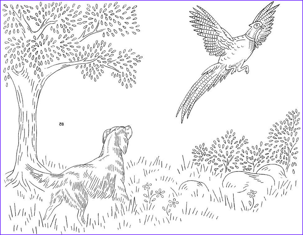Pheasant Coloring Page Luxury Collection Dog Hunting Pheasant Embroidery Pattern