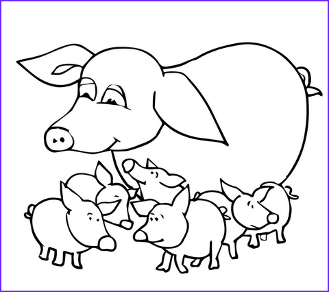 baby pigs and mother