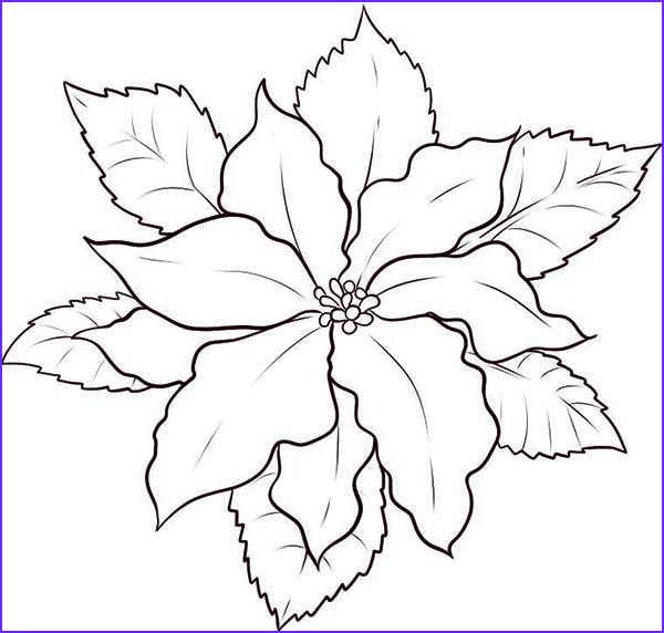 how to draw poinsettia coloring page