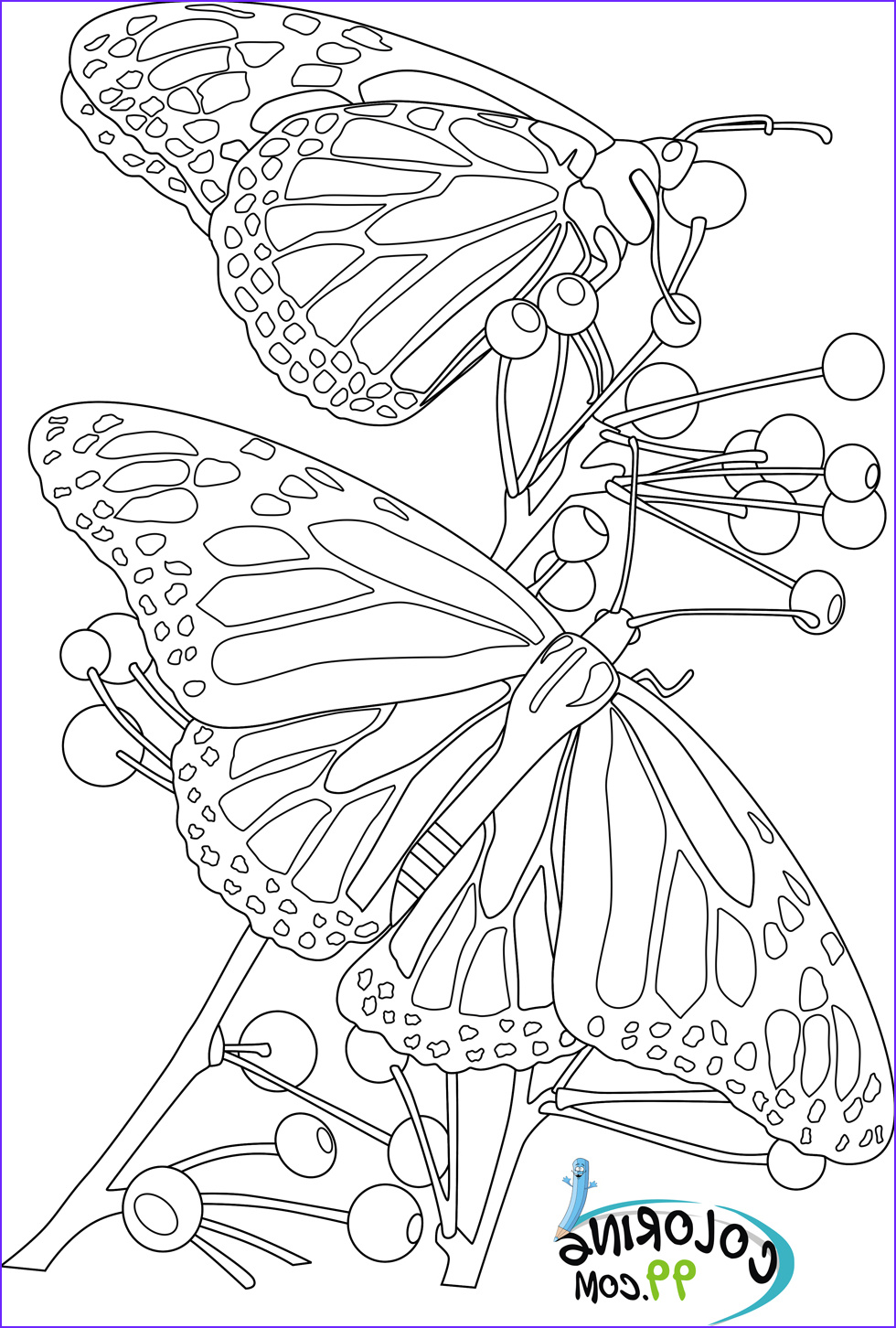 Print Coloring Page Elegant Photos butterfly Coloring Pages