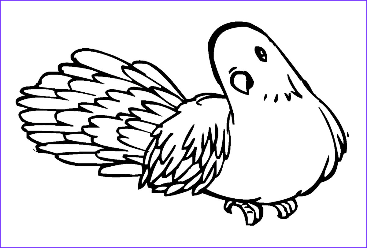 pigeon coloring pages