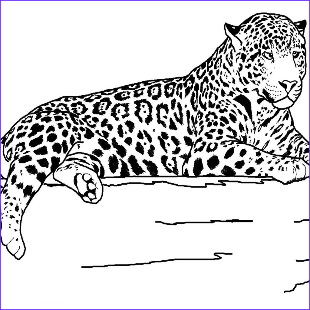Realistic Animal Coloring Page Beautiful Gallery Realistic Animals Coloring Pages