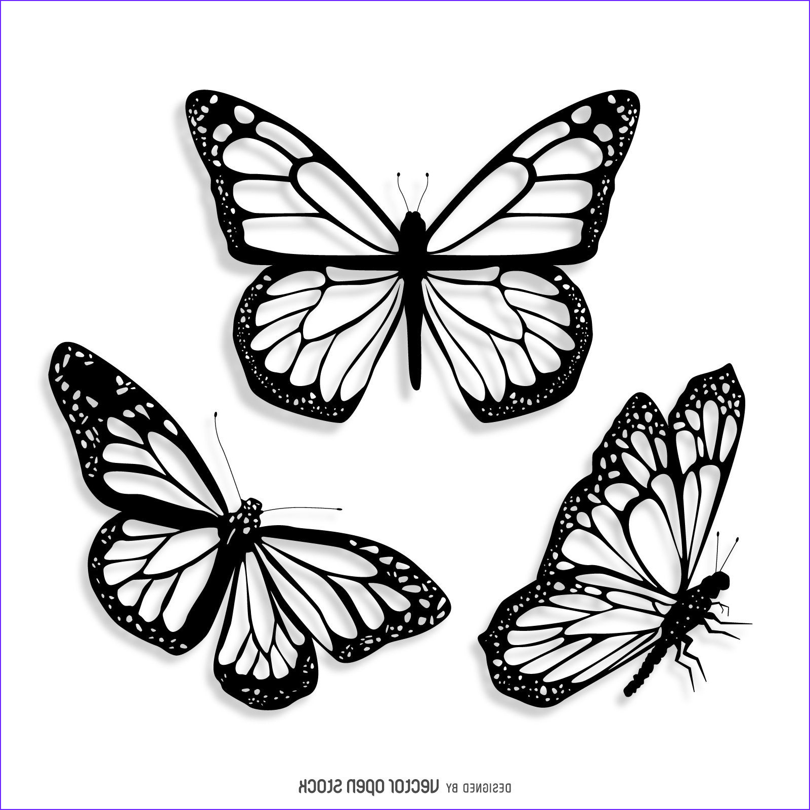 realistic butterfly drawing