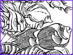 Sea World Coloring Page Beautiful Photography Sea World Coloring Pages Free Coloring Pages