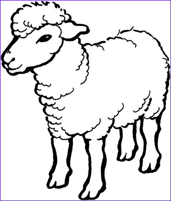 alpha male sheep coloring page