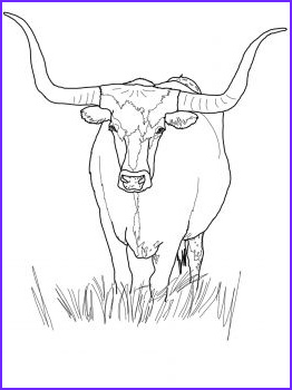 Texas Longhorn Coloring Page Beautiful Photography Texas Longhorn Cattle Animal Colouring Pages