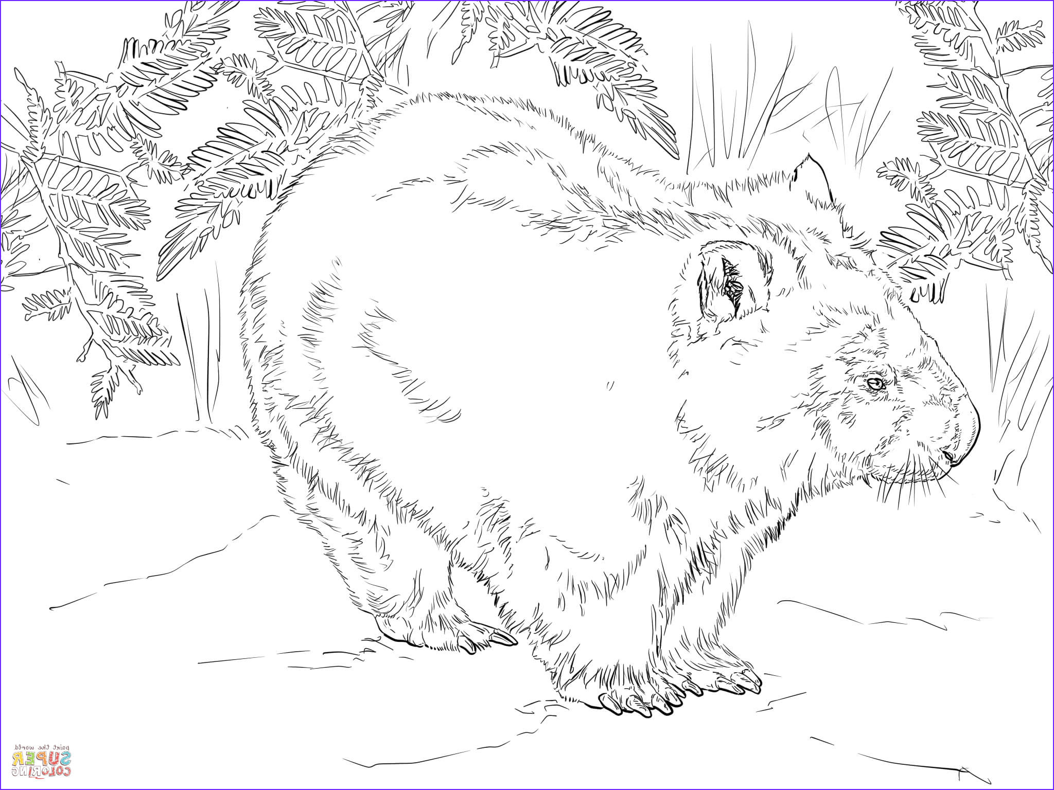 Wombat Coloring Page Elegant Image Wombat From Australia Coloring Page